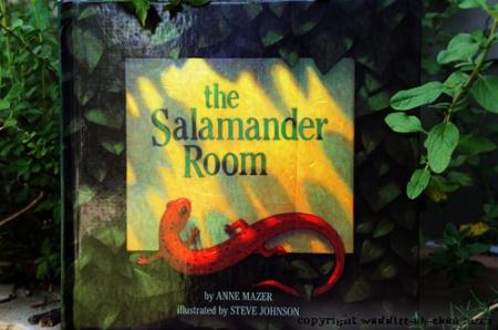 Salamander-Room